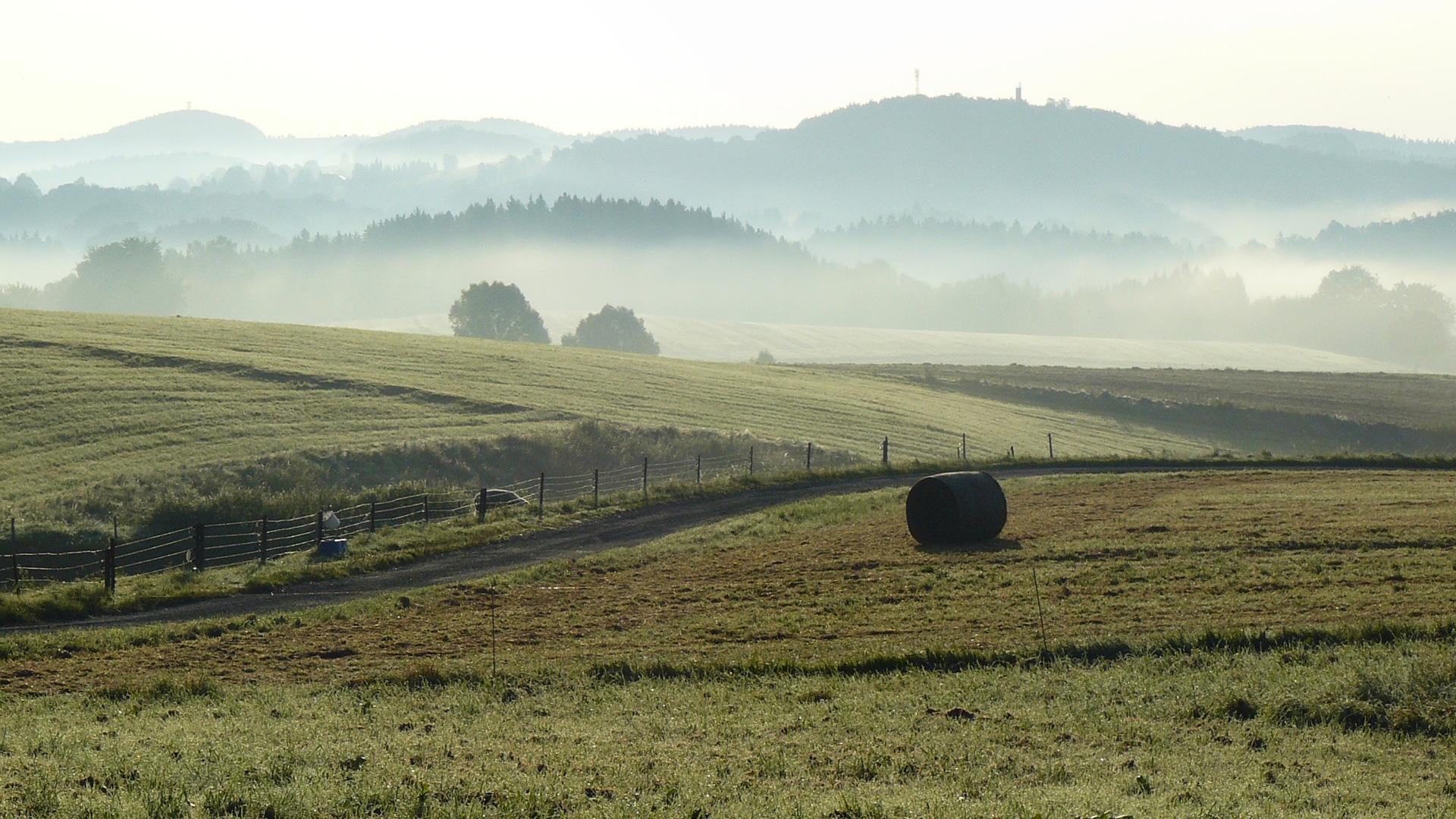 Natur pur auf dem Panoramaweg Sächsische Schweiz