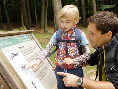 """m Erlebnisgelände """"Waldhusche"""" in Hinterhermsdorf im Nationalpark Sächsische Schweiz sind 40 Mitmach-Stationen aufgebaut."""